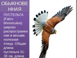 ОБЫКНОВЕННАЯ ПУСТЕЛЬГА (FALCO TINNUNCULUS) ПУСТЕЛЬГА (Falco tinnunculus) широ