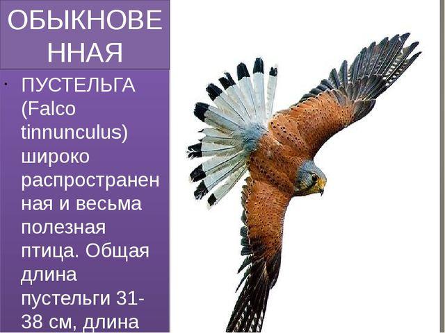 ОБЫКНОВЕННАЯ ПУСТЕЛЬГА (FALCO TINNUNCULUS) ПУСТЕЛЬГА (Falco tinnunculus) широ...