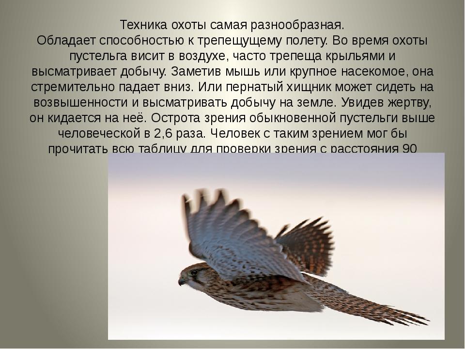 Техника охоты самая разнообразная. Обладает способностью ктрепещущему полету...