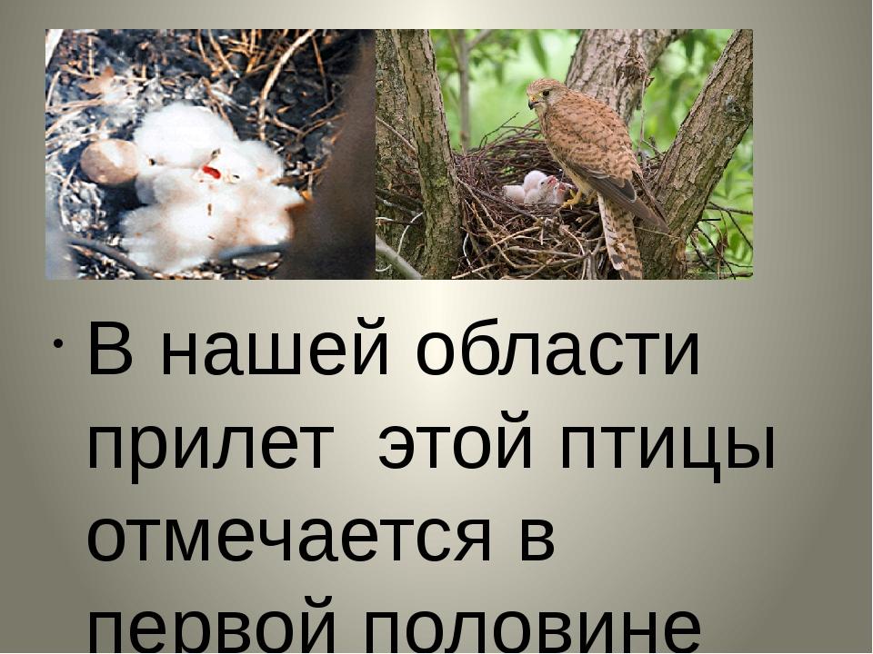 В нашей области прилет этой птицы отмечается в первой половине апреля. Своих...