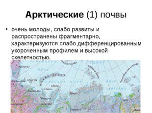 Арктические (1) почвы очень молоды, слабо развиты и распространены фрагментар