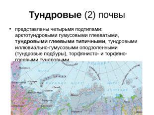 Тундровые (2) почвы представлены четырьмя подтипами: арктотундровыми гумусовы