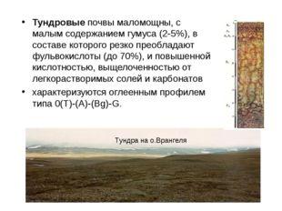 Тундровые почвы маломощны, с малым содержанием гумуса (2-5%), в составе котор