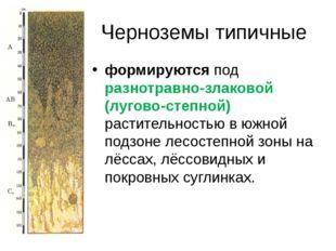 Черноземы типичные формируютсяпод разнотравно-злаковой (лугово-степной) раст