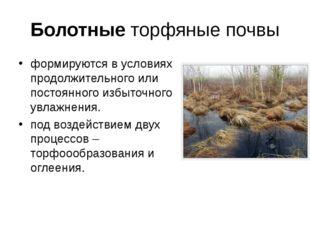 Болотные торфяные почвы формируются в условиях продолжительного или постоянно