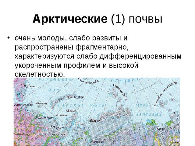 Арктические (1) почвы очень молоды, слабо развиты и распространены фрагментар...