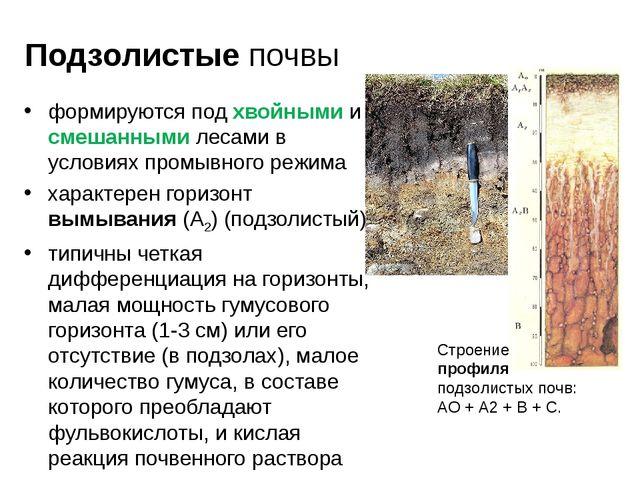 Подзолистые почвы формируются под хвойными и смешанными лесами в условиях про...