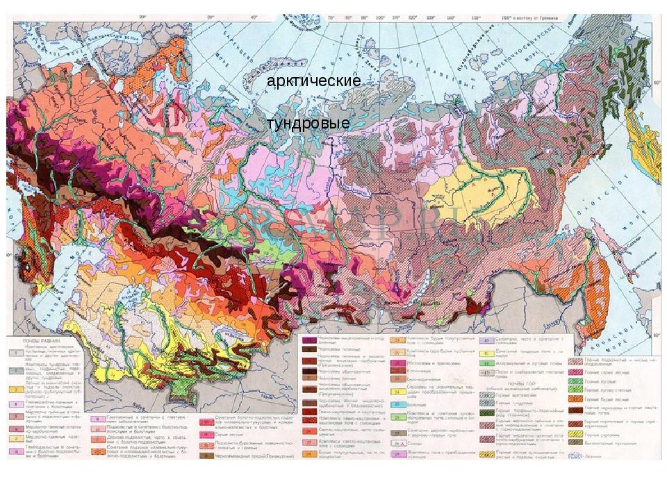 арктические тундровые