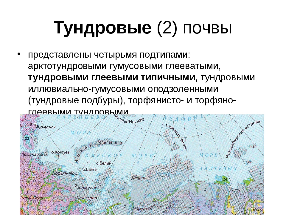 Тундровые (2) почвы представлены четырьмя подтипами: арктотундровыми гумусовы...