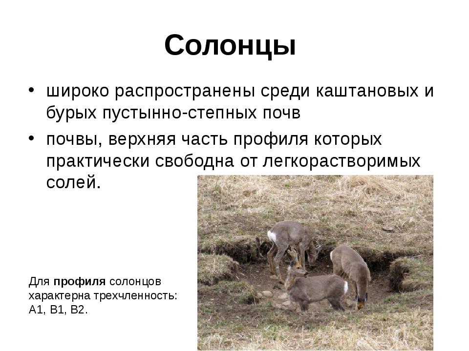 Солонцы широко распространены среди каштановых и бурых пустынно-степных почв...