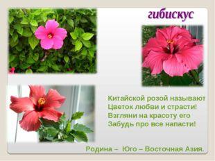 Китайской розой называют Цветок любви и страсти! Взгляни на красоту его Забуд
