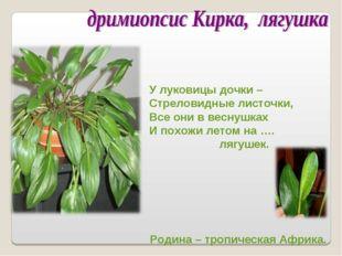 У луковицы дочки – Стреловидные листочки, Все они в веснушках И похожи летом