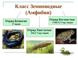 Отряд Бесхвостые 3 500 (12 Укр.) видов Отряд Хвостатые 350 (5 Укр.) видов Отр