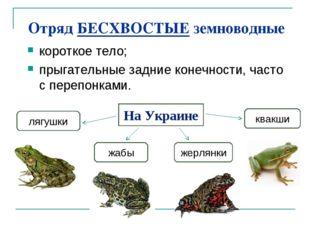 Отряд БЕСХВОСТЫЕ земноводные короткое тело; прыгательные задние конечности, ч