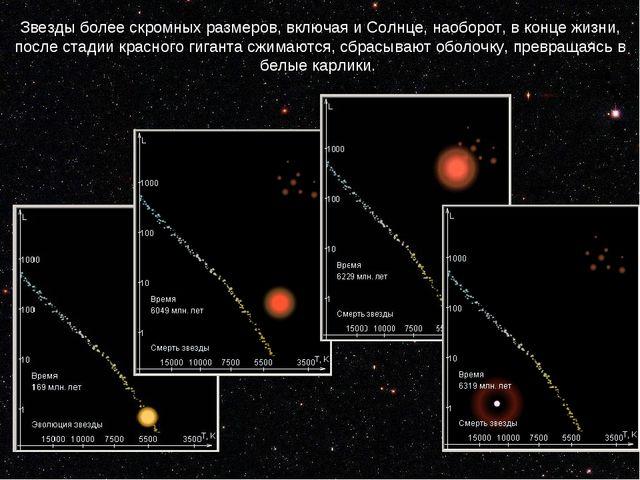 Звезды более скромных размеров, включая и Солнце, наоборот, в конце жизни, по...