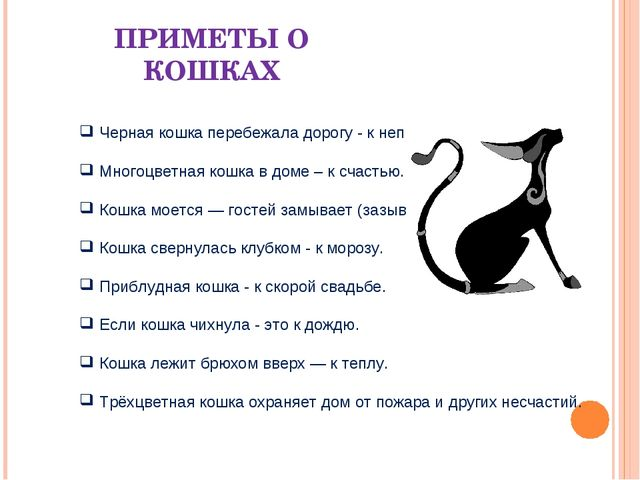 секс появление черной кошки в доме приметы подсматривать? Тогда