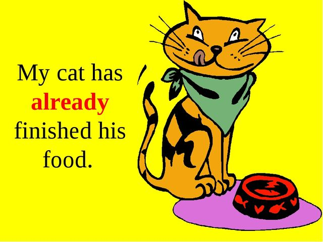 My cat has already finished his food.