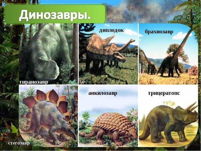 брахиозавр диплодок анкилозавр трицератопс тиранозавр диплодок брахиозавр анк...
