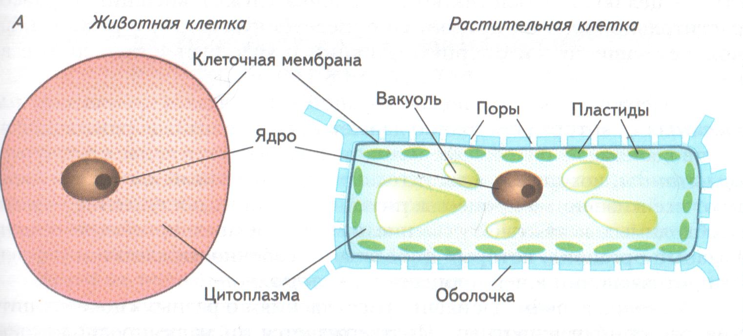 Биология 8 класс драгомилов с 100 отметьте верные утверждения