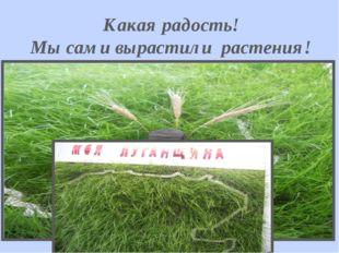 Какая радость! Мы сами вырастили растения!