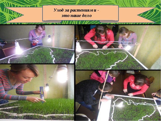 Уход за растениями - это наше дело