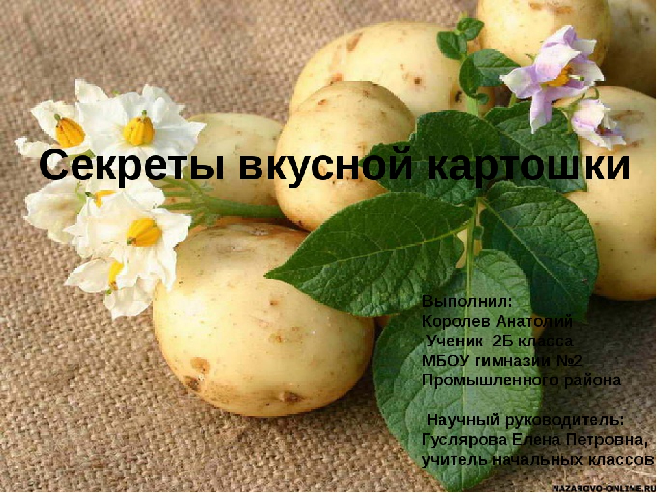 Секреты вкусной картошки Выполнил: Королев Анатолий Ученик 2Б класса МБОУ гим...