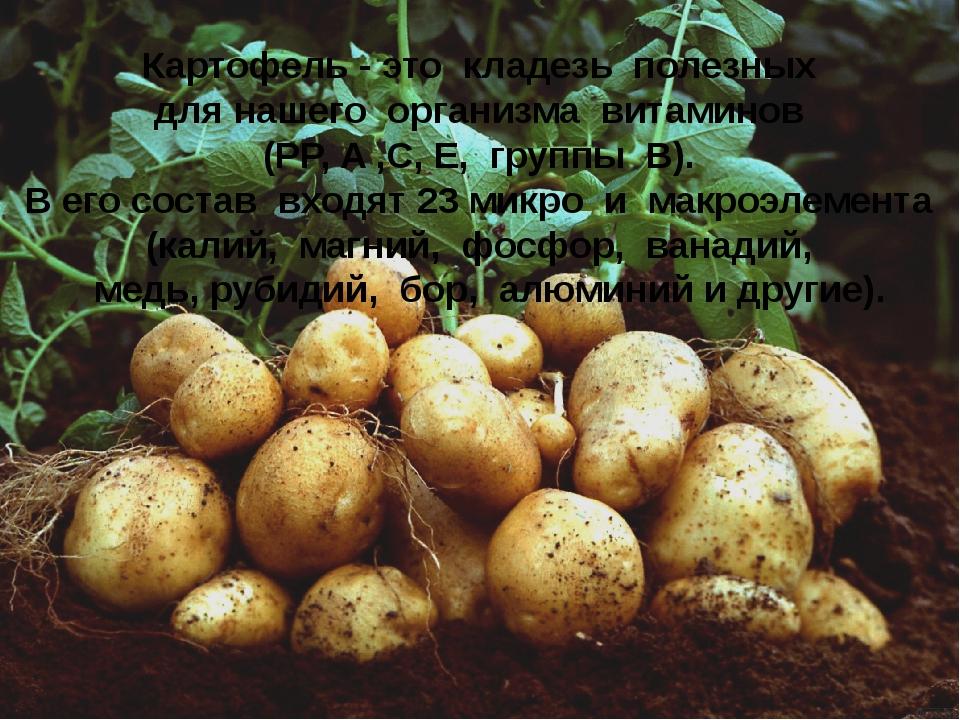 Картофель - это кладезь полезных для нашего организма витаминов (PP, A ,C, E,...