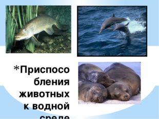 Приспособления животных к водной среде обитания