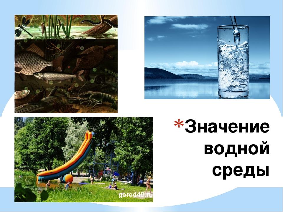 Значение водной среды