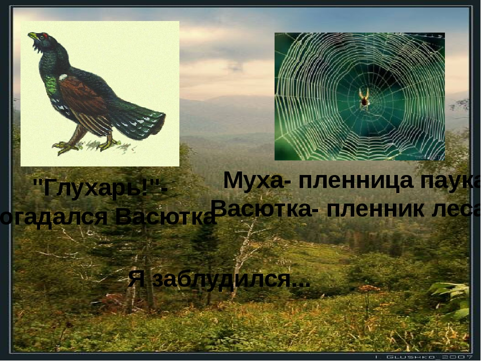 """Я заблудился... """"Глухарь!""""- догадался Васютка Муха- пленница паука, Васютка-..."""