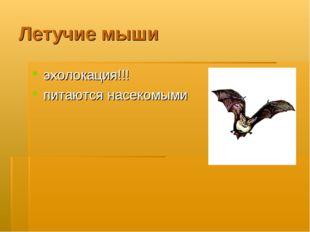 Летучие мыши эхолокация!!! питаются насекомыми