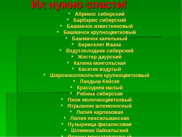 Их нужно спасти! Абрикос сибирский Барбарис сибирский Башмачок известняковый...