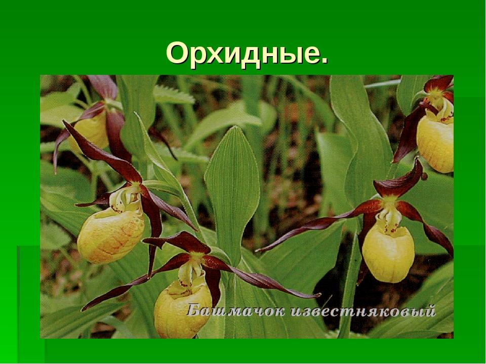 Орхидные.