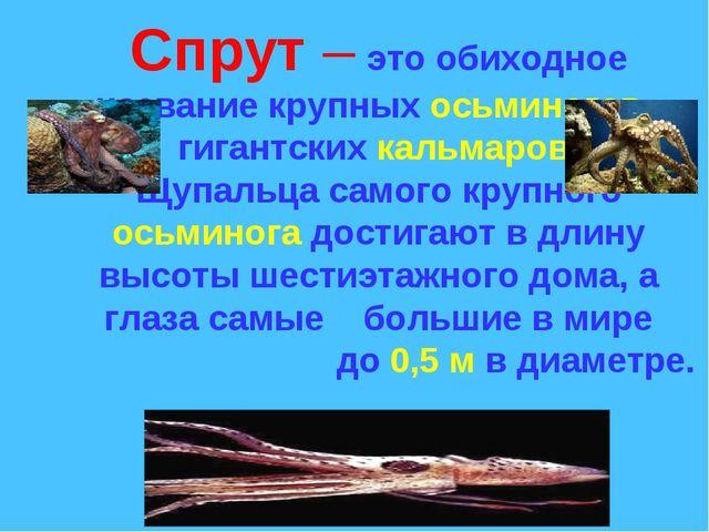 Спрут – это обиходное название крупных осьминогов, гигантских кальмаров. Щуп...