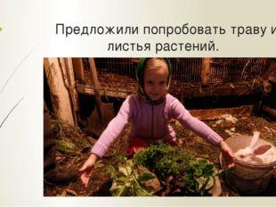 Предложили попробовать траву и листья растений.