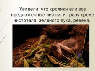Увидели, что кролики ели все предложенные листья и траву кроме чистотела, зел