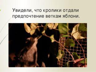 Увидели, что кролики отдали предпочтение веткам яблони.