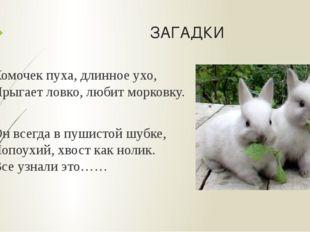 ЗАГАДКИ Комочек пуха, длинное ухо, Прыгает ловко, любит морковку. Он всегда в