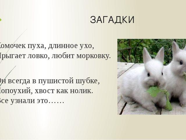 ЗАГАДКИ Комочек пуха, длинное ухо, Прыгает ловко, любит морковку. Он всегда в...