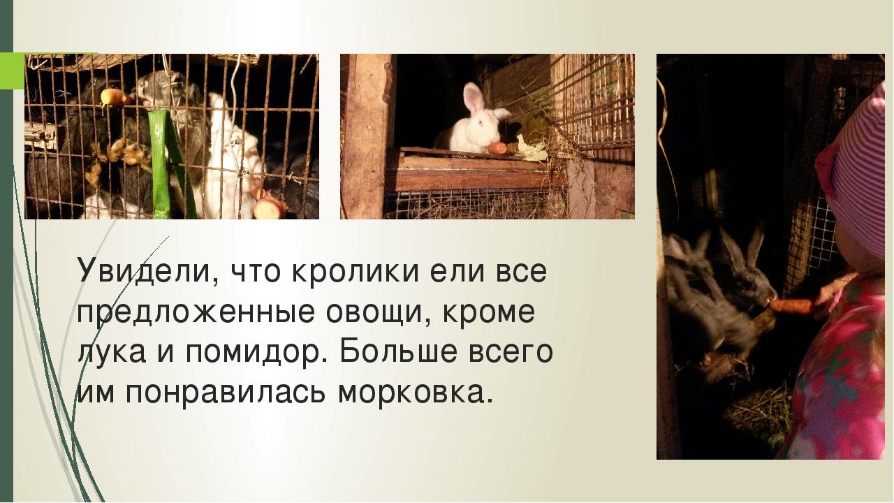 Увидели, что кролики ели все предложенные овощи, кроме лука и помидор. Больше...