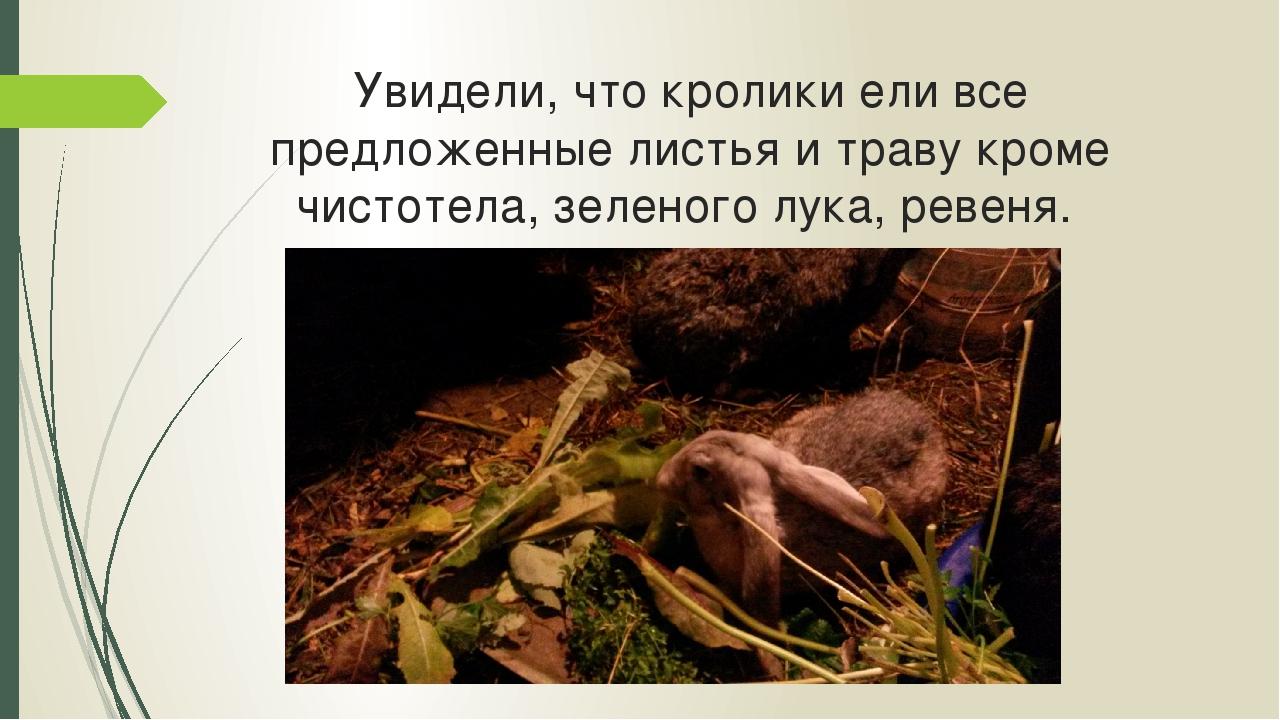Увидели, что кролики ели все предложенные листья и траву кроме чистотела, зел...