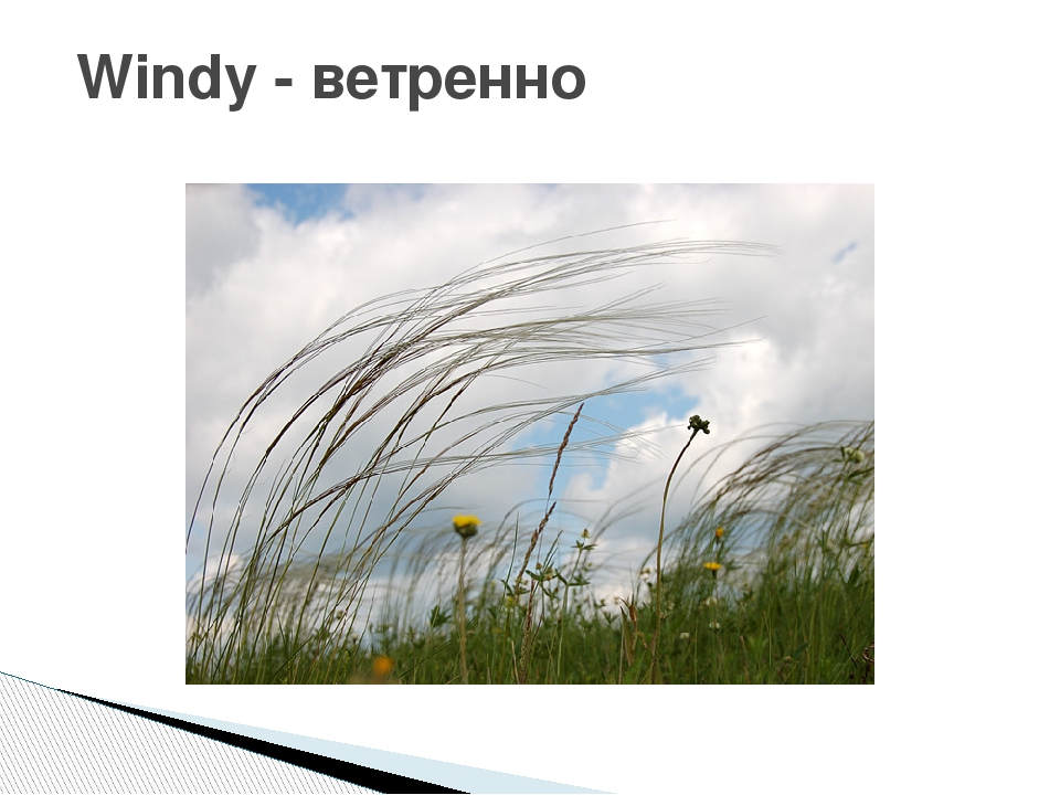 Windy - ветренно