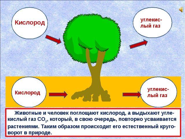 углекис-лый газ углекис-лый газ Кислород Кислород Животные и человек поглощaю...