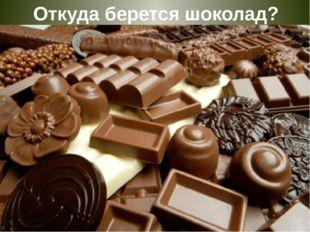 Откуда берется шоколад?
