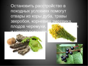 Остановить расстройство в походных условиях помогут отвары из коры дуба, трав