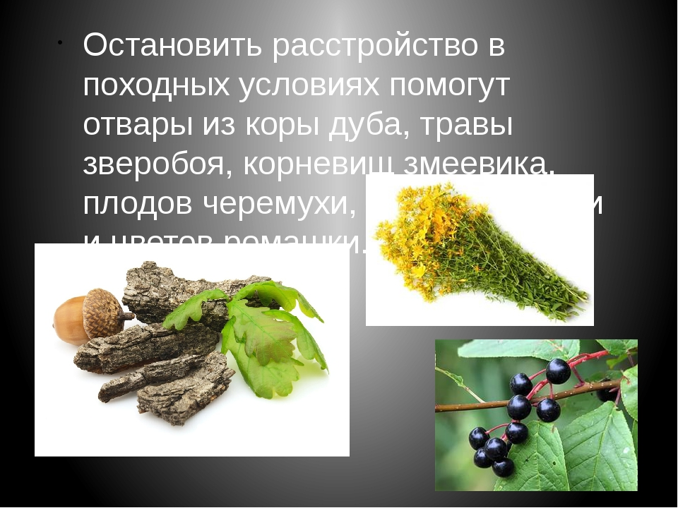 Остановить расстройство в походных условиях помогут отвары из коры дуба, трав...