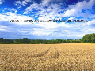 Нива – поле, засеянное хлебными злаками.