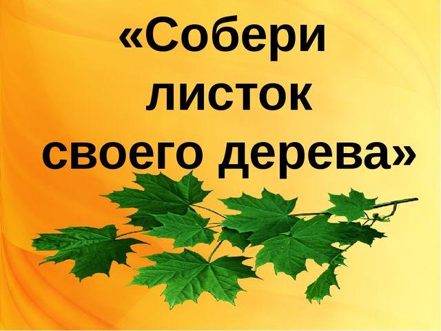 «Собери листок своего дерева»