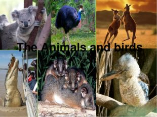 The Animals and birds