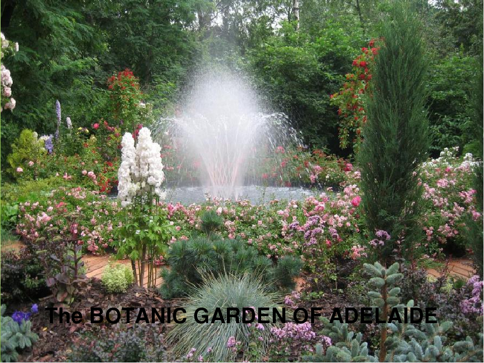 The BOTANIC GARDEN OF ADELAIDE